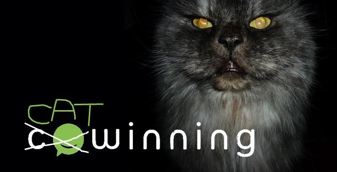 CatWinning copyright Cristina Rigutto